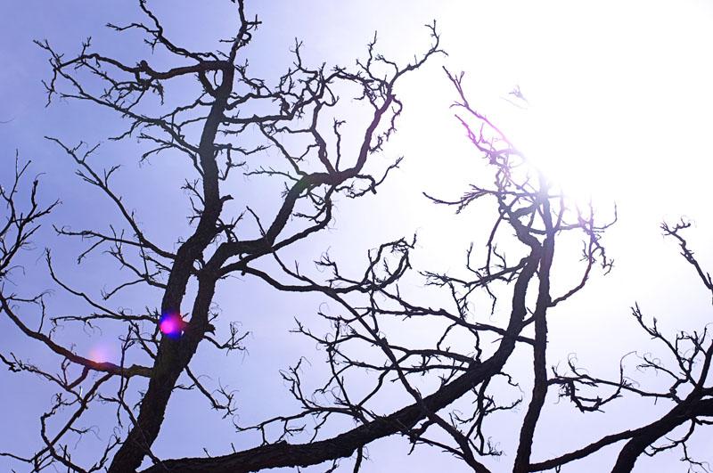 apriltrees