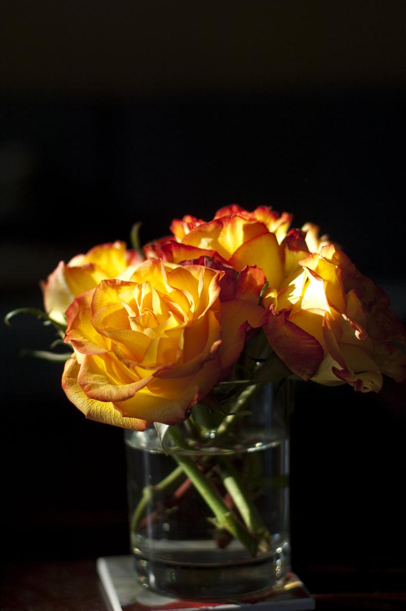 yellowredroses