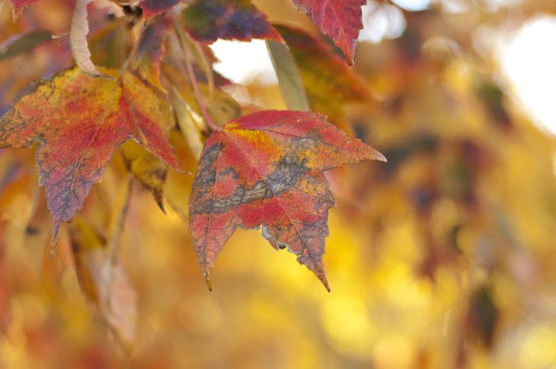 2015_fall_02