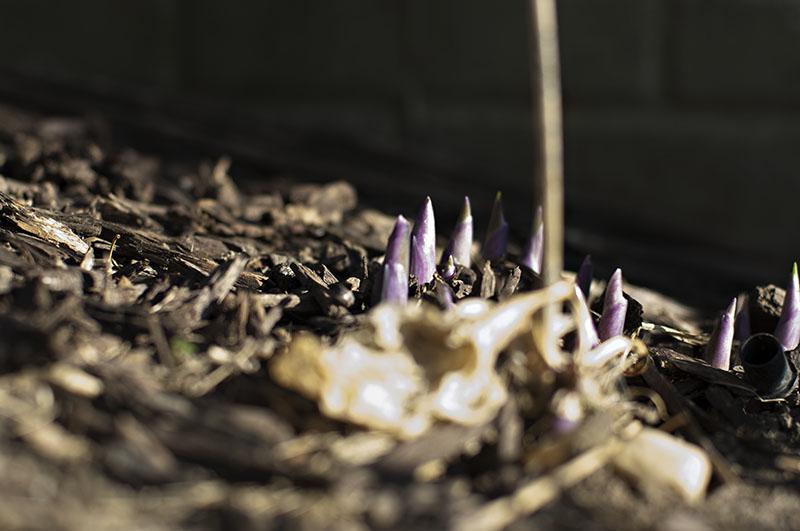 2017_purple_plants