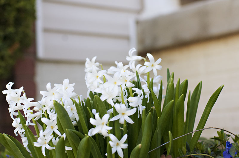 bulbs_white_front