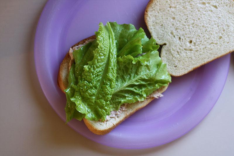 r_lettuce_03