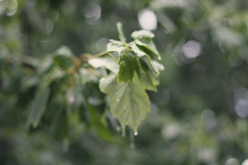 rain_06