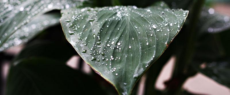 rain_leaf_job