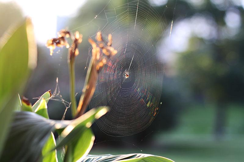 r_spider_web_summer_01