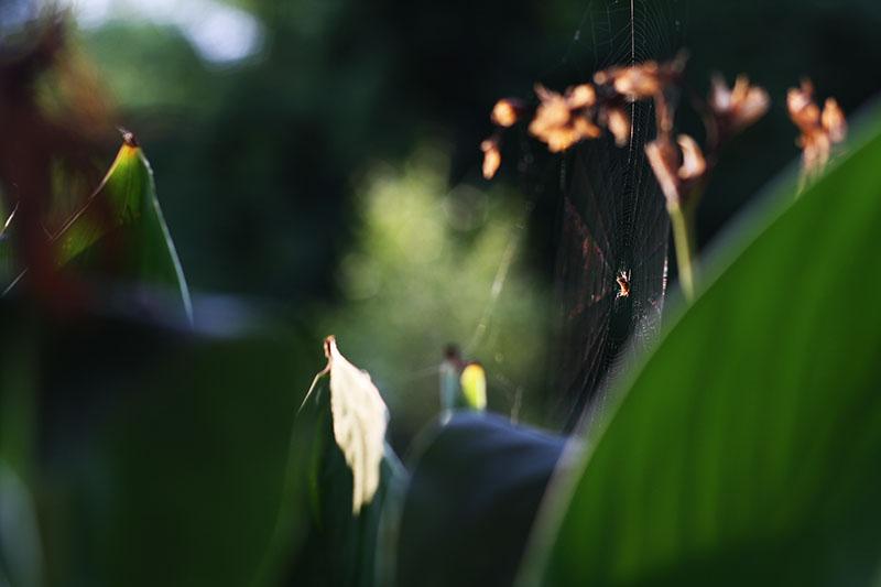 r_spider_web_summer_02