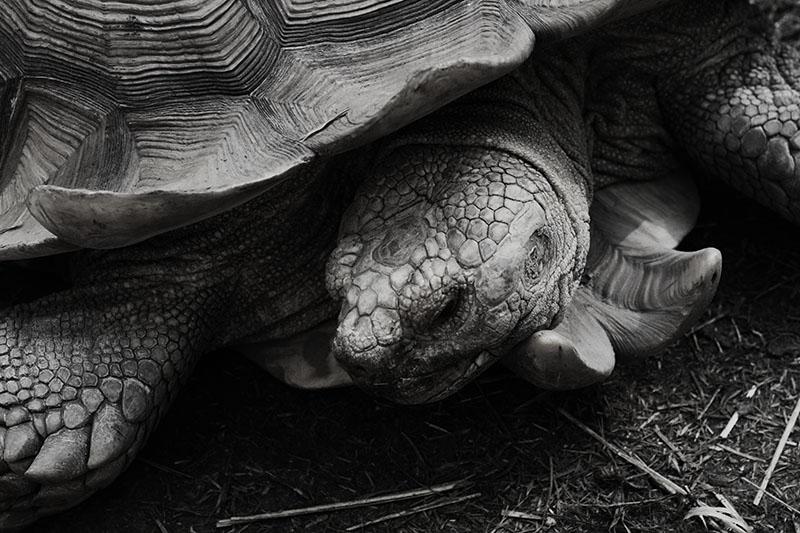 r_turtle_zoo